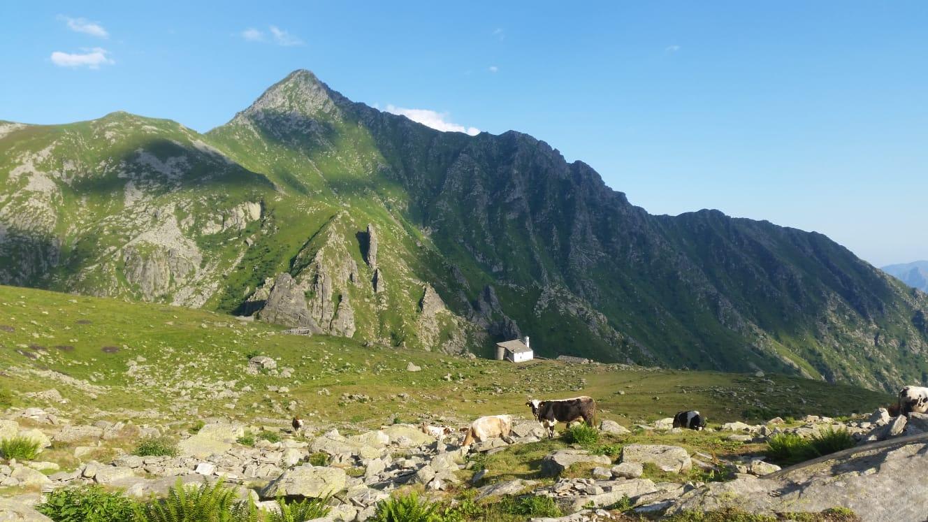 Alpe Ciavanis (2)