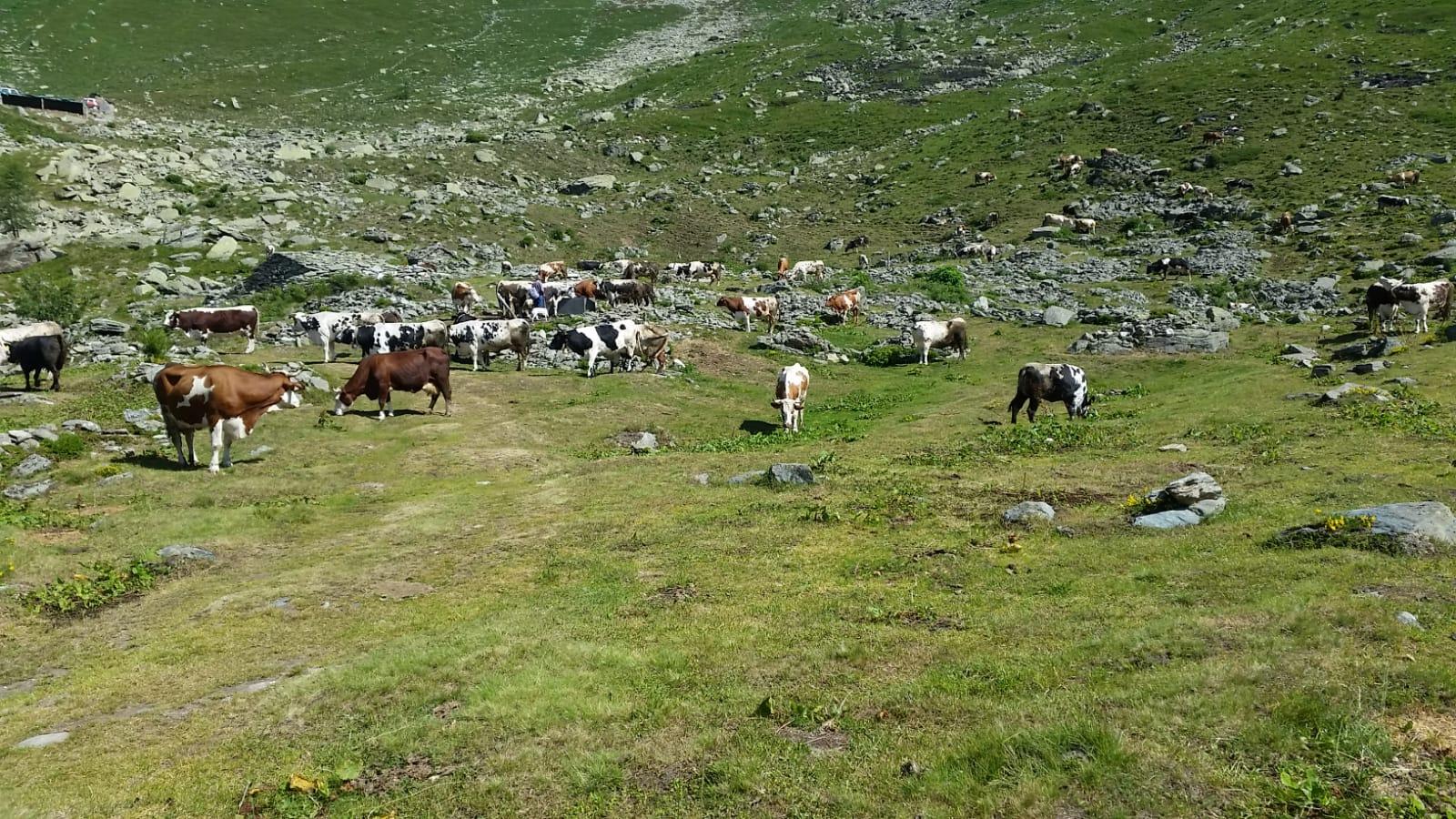 Alpe Ciavanis